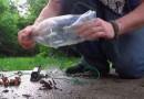 2 liter fish trap