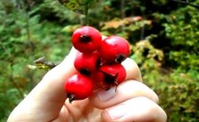how to find edible plants for survival