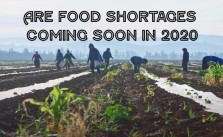 Are Food Shortages Coming Soon In 2020
