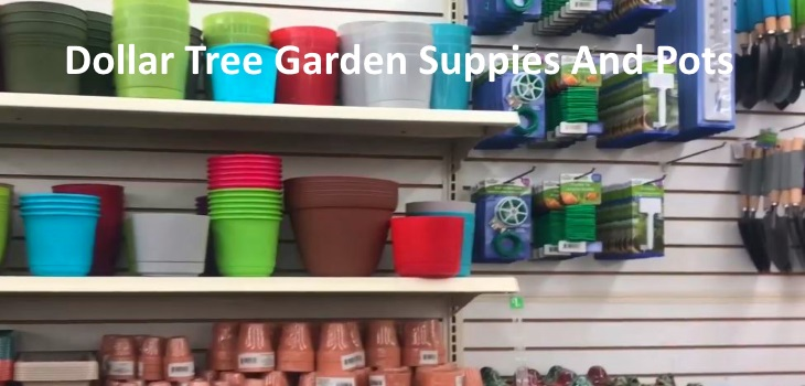 Find Cheap Garden Supplies Planters At Dollar Tree Store